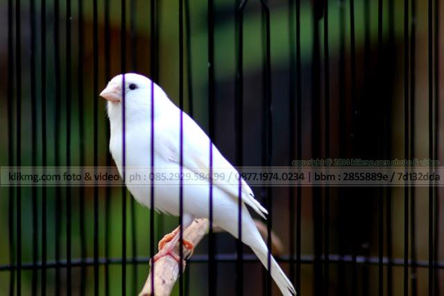 Burung Cantik nan Lucu