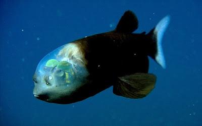10 Misteri Lautan Yang Membuat Kita Semua Tercengang