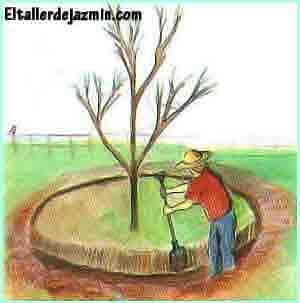 trasplante, árboles, arbustos