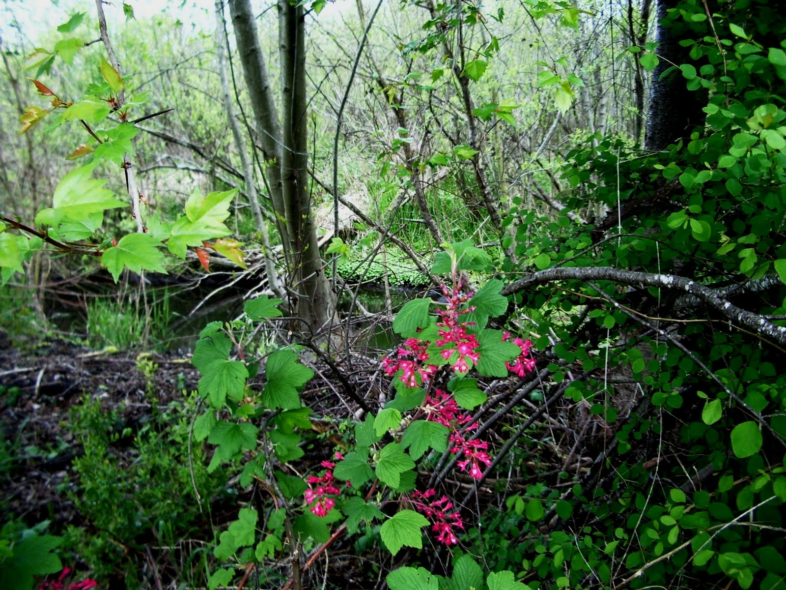 the Nature of Portland: Minthorn Springs Wetland ...