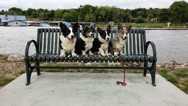 Dogs at Lake Dora