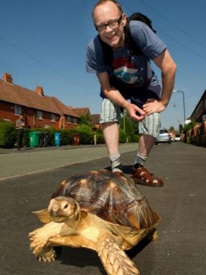 pasear a su tortuga