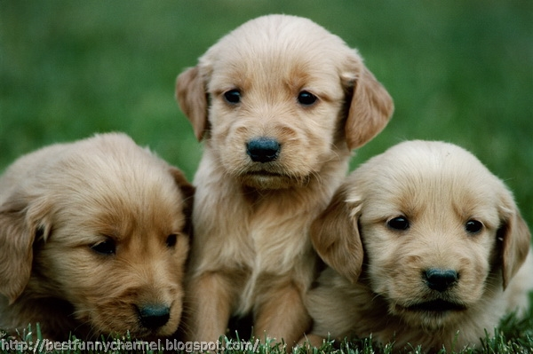 pictures of cute puppies 6