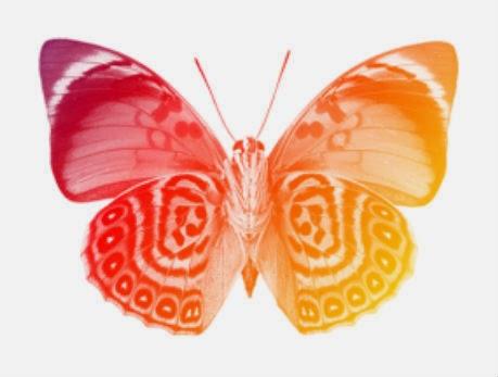 borboleta 1