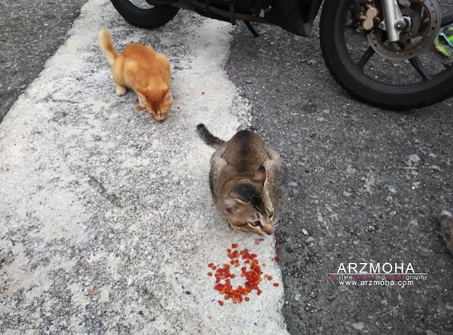tips didik anak sayangi kucing, kucing, gambar kucing makan, tips luang masa bersama anak-anak di waktu cuti,