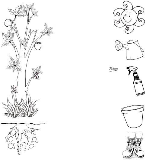 Utilidades de las plantas para colorear - Imagui