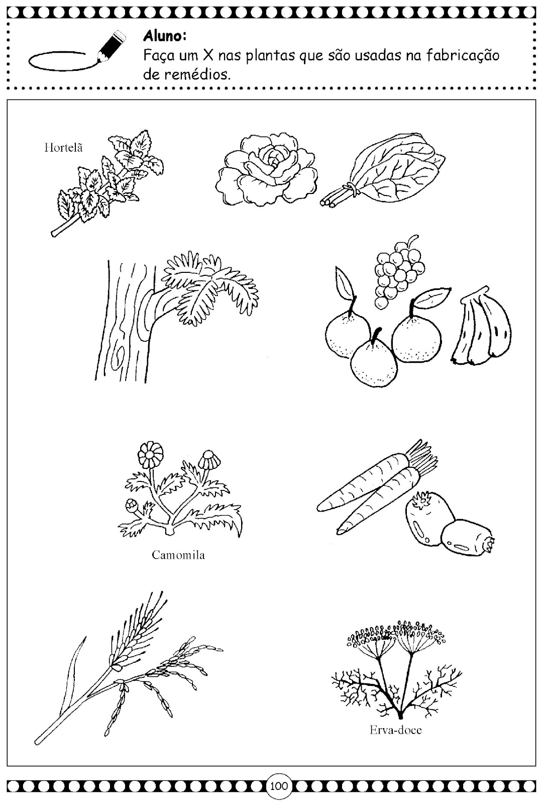 sobre as plantas, atividades ciências, atividades educação infantil