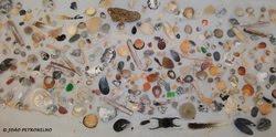 ARTIGO NA WILDER: Beachcombing.