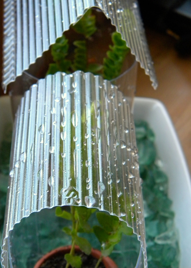 Homework a creative blog upcycling plastic greenhouses for What is a greenhouse made out of
