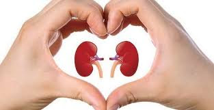 Kesehatan Organ Ginjal