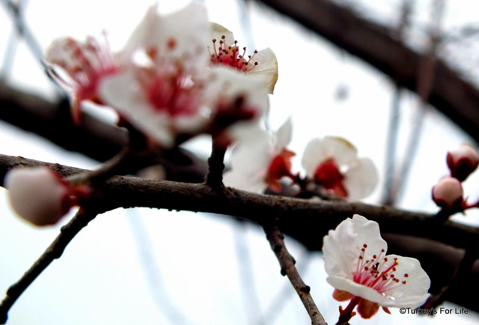 Fethiye In Spring