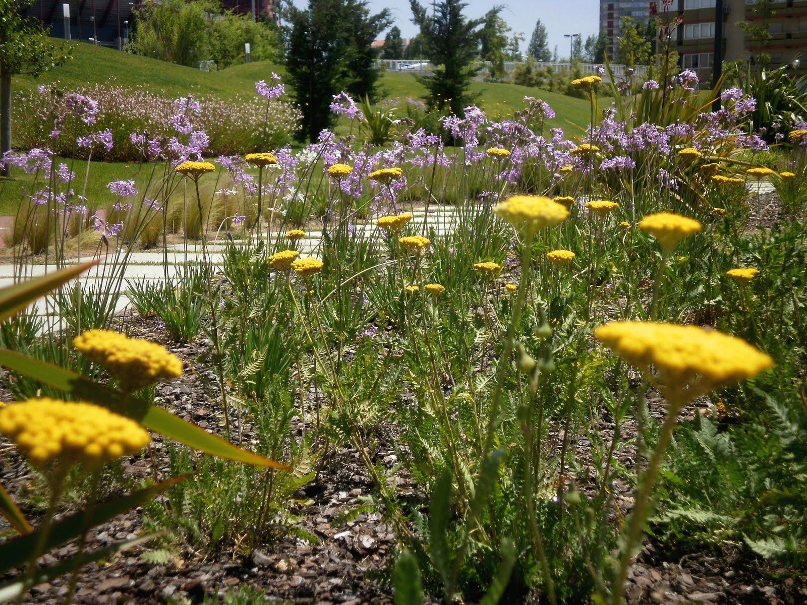 plantas bordaduras jardimCores do final da Primavera
