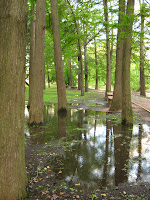 Rain puddle trees park stock photo