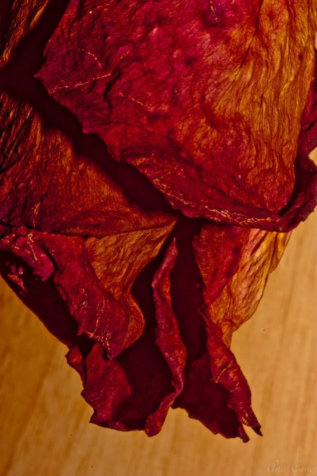 La flor marchita aun tiene perfume - 1 part 8