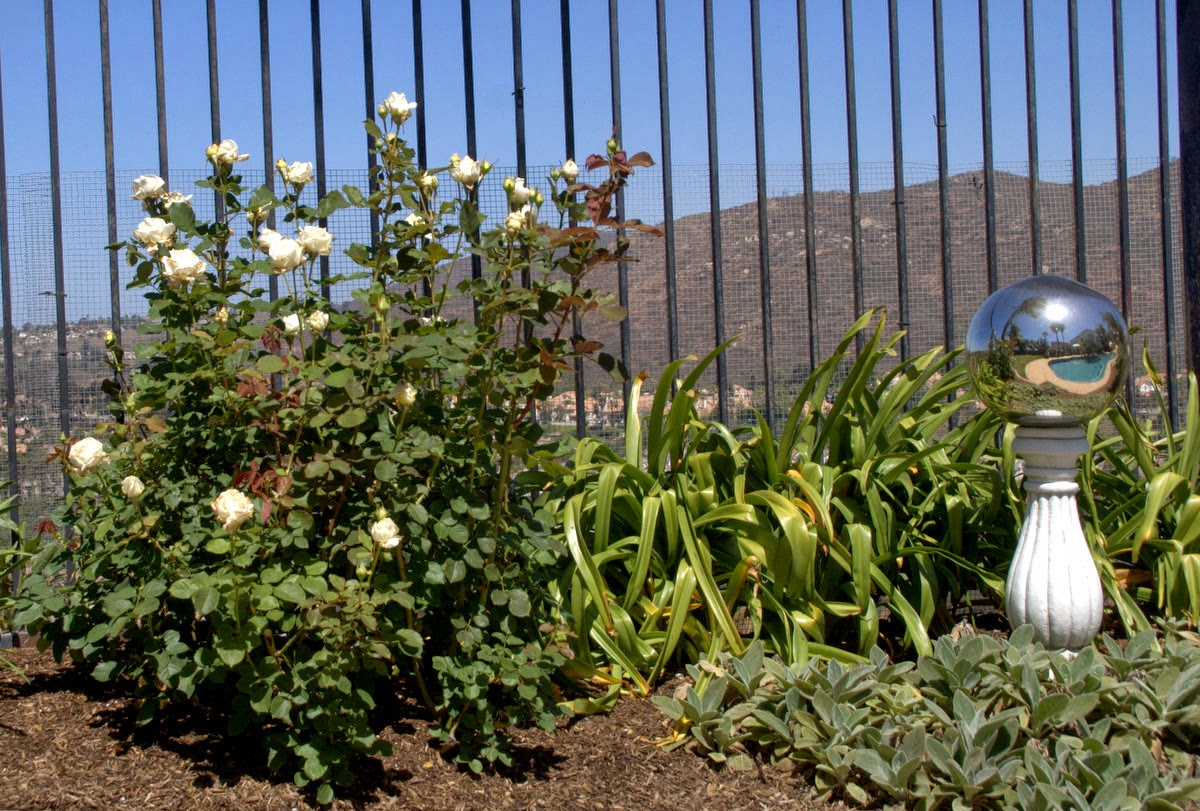 Organic Garden Dreams End Of Month View The White Garden Bed