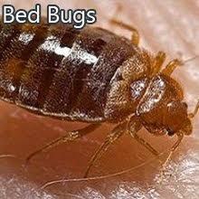 Best Seattle Pest Control