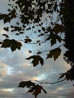 Plane+Tree+Compton+Verney
