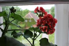 Begonia beauty.