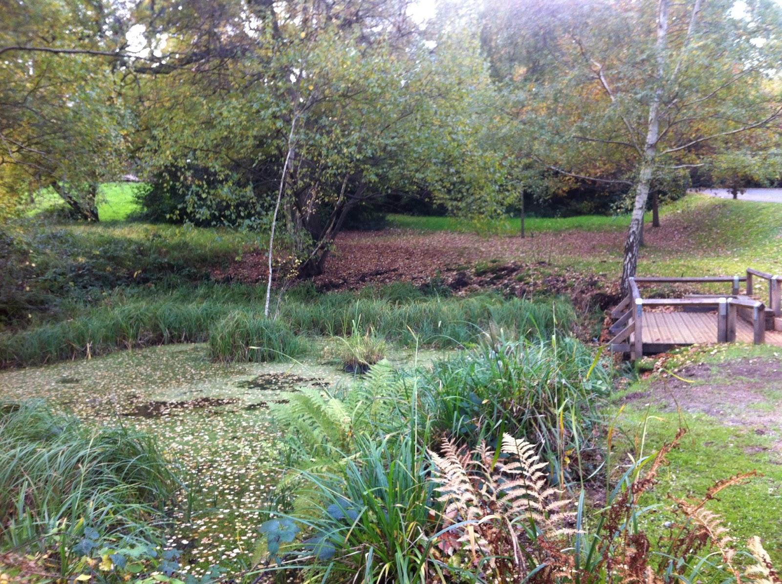 Kingston university biodiversity action group 16 11 2013 for Pond maintenance