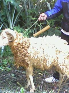 Contoh domba peiharaan binaan