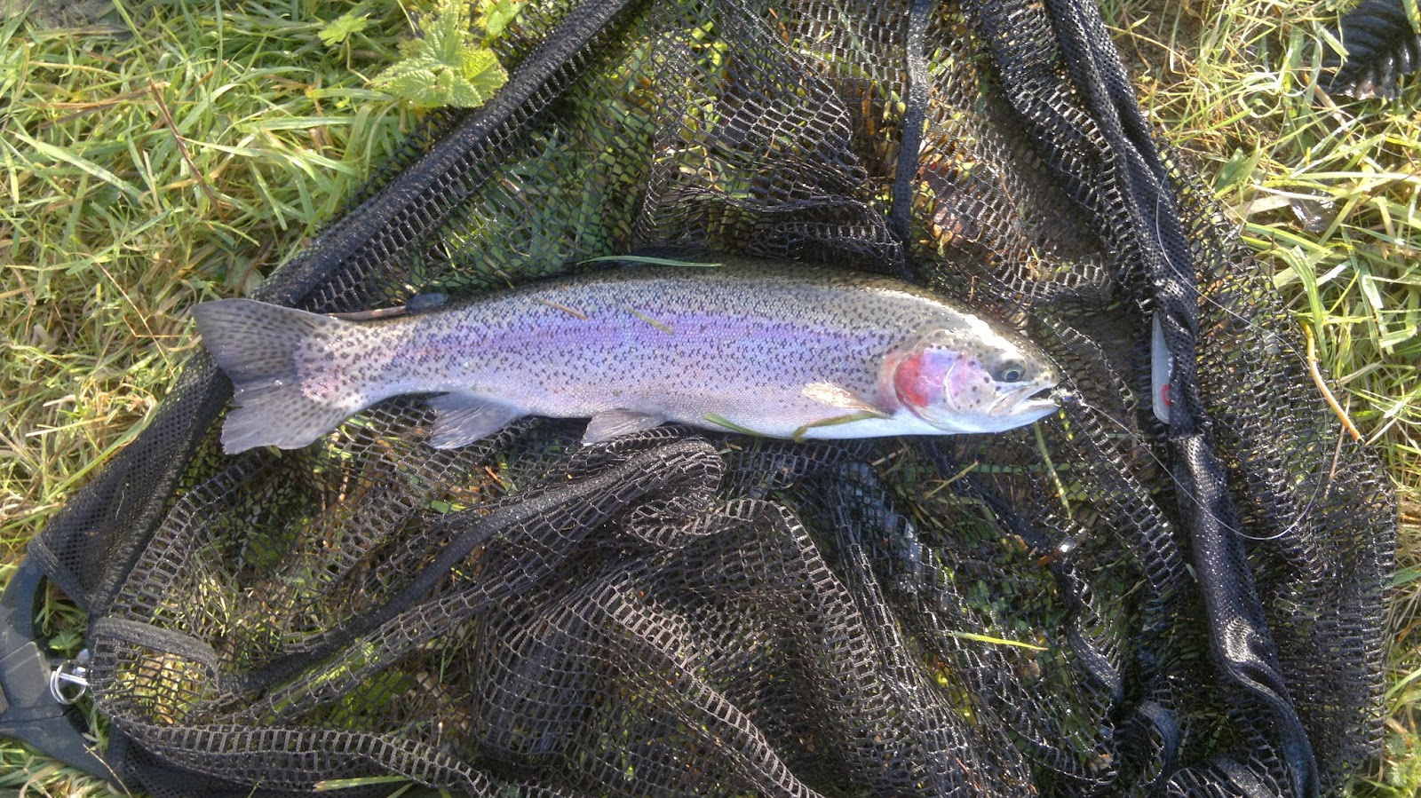 Go fishing with cadbury angling trout fishing to beat for Winter trout fishing