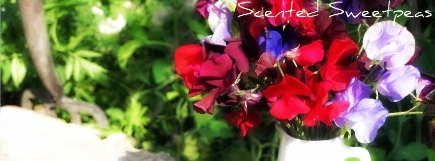 Scented-Sweetpeas Creations