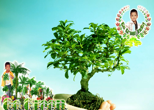 save trees wallpaper 1 - photo #11