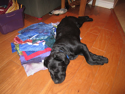 Romero, a fast asleep black lab puppy is lying on his side on a wood floor on top of a large stack of different colours of fabric. Behind him there is a purple bin containing even more fabric. Romero is stretched out quite comfortably on his fabric pillow, with his front paws crossed over each other, and his face smooshed against the floor.