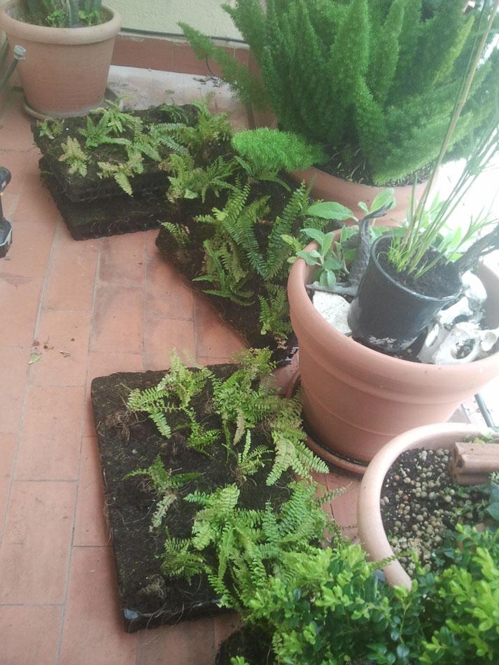 Jard n vertical en una terraza de factor a verde - Jardin vertical terraza ...