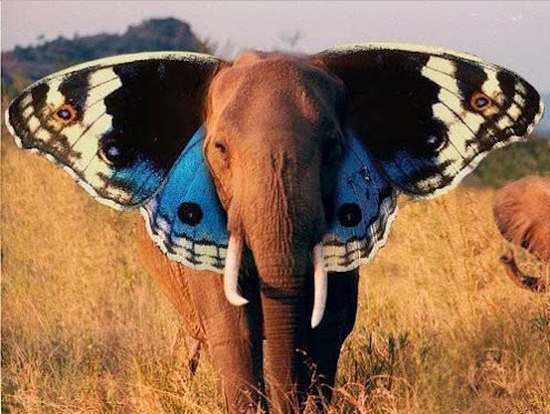 Funny-elephant-butterfly