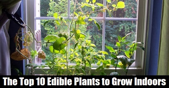 The Natural Health Page The Top 10 Edible Plants To Grow