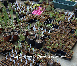 potted plants for backyard nursery