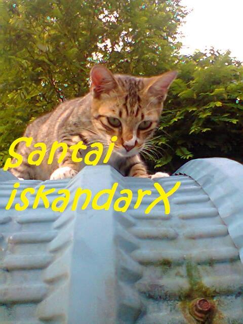 iskandarx.blogspot.com, Si Faizal merajuk ke hapa sampai ketas bumbung, santai, Faizal, duduk, atas, bumbung, garaj