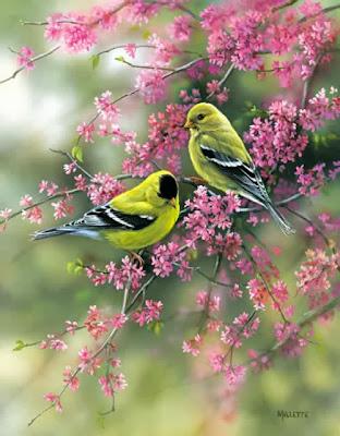 Immagini fiori animati 28 images immagini di fiori animati for Sfondilandia primavera