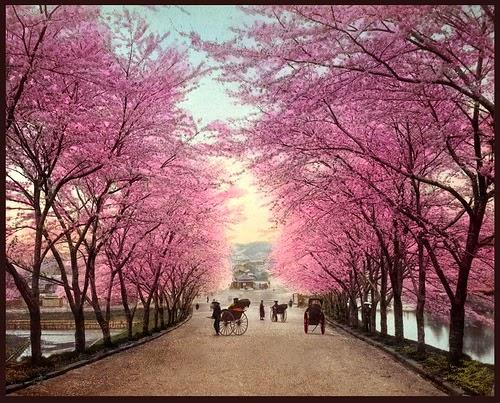 Japanese Cherry Blossom Garden Wallpaper|http ...
