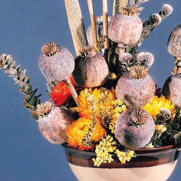 Florists Poppy