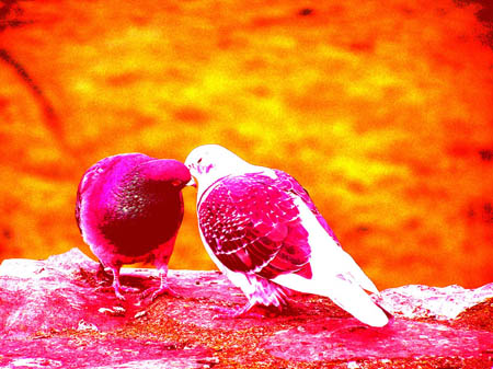 Love cute Romantic Wallpaper : Funny Animal: cute love birds wallpapers