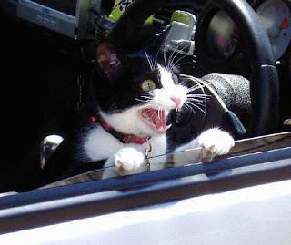 Imagenes Graciosas de Gatos
