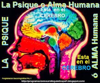 La capacidad de procesamiento y almacenamiento del cerebro humano estándar supera aun a los mejores ordenadores hoy en día. El cerebro humano no tiene paralelos en cuanto a su capacidad y poder. (Solo la frase Dios hizo al hombre a su imagen y semejanza, podría explicar tan infinito poder)