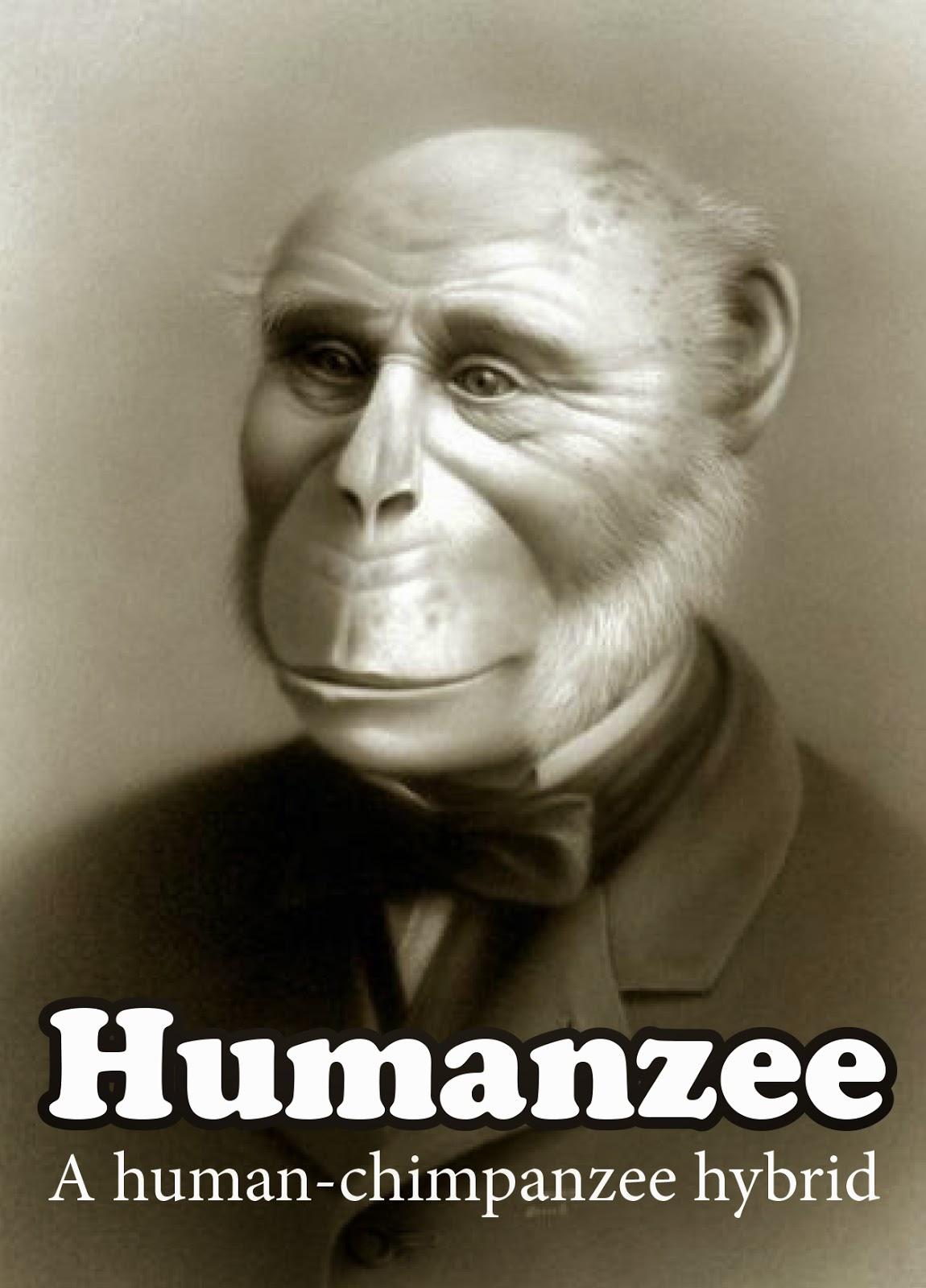 Humanzee Humanzee - a human-chimpanzee hybrid Yerkes Humanzee