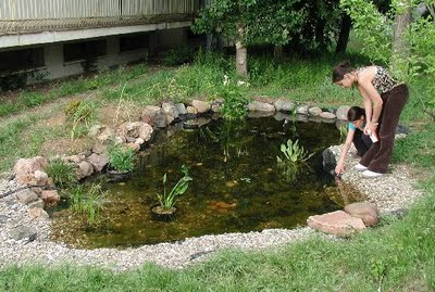 Arte y jardiner a proyecto de un jard n acu tico for Estanque de concreto