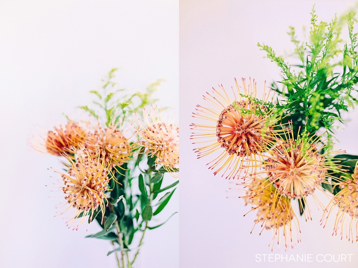 orange and pink pincushion flowers