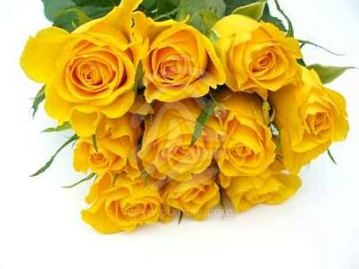 Valentines day roses valentine day it means friendship and freedom you shouldnt send this rose if you have romantic feelings for someone yellow roses are also a perfect choice for sending mightylinksfo