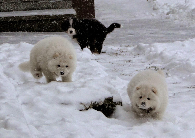 Pierwszy śnieg - świetna zabawa :)
