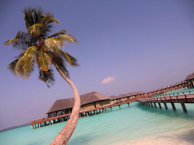 Мальдивы-Свадьба