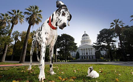 Gsv Pics - Photos with Poetry: Worlds Biggest DOGS ... - photo#18
