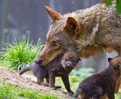 In bocca al lupo a tutti