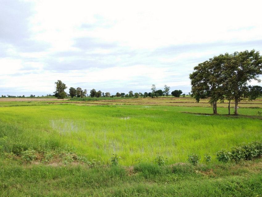 ที่ดินการเกษตร สุพรรณบุรี