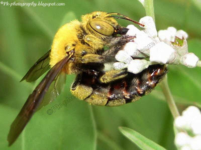Teddy Bear Bee Picture