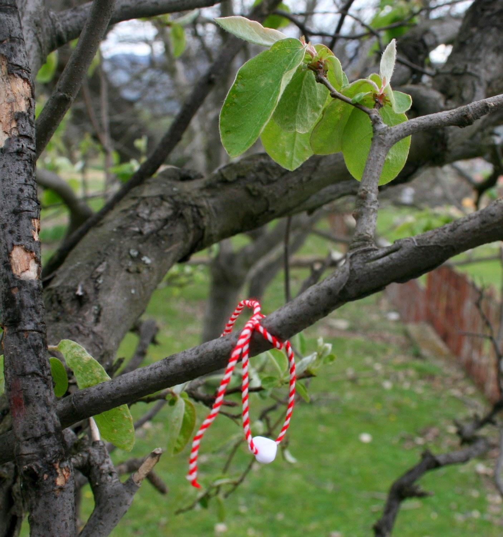 Bringing good productivity to this walnut tree